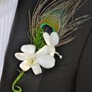 130x130 sq 1344453385650 dendrobewithpeacockfeatherboutonniere