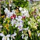 130x130 sq 1313445121326 nurseryorchids