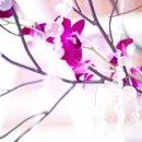 130x130 sq 1326123548034 orchid