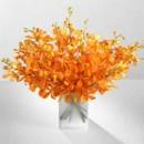 130x130 sq 1376413268386 orange citrine orchid flowerssummer wedding centerpiece