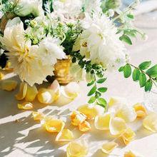 220x220 sq 1477050693 7f11d51376987f67 brynne scott belle mer wedding rebecca arthurs 0520