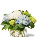 130x130 sq 1457361266343 mighty hydrangeas miami gardens flower delivery av