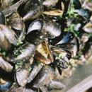 130x130 sq 1374766817378 musselsleighwebber