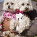 130x130 sq 1450374127968 princess dogs