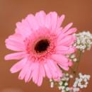 130x130 sq 1449769734499 pink wedding flower