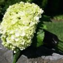 130x130 sq 1459575380251 bb1023 simple green hydrangea bridesmaids bouquet