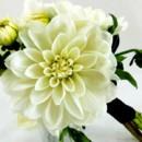 130x130 sq 1459656660097 bb1006 white dahlia bridesmaids bouquet