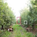 130x130 sq 1419874039268 orchardwedding 0101