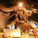130x130 sq 1381380019634 orlando science center dino digs dinosaur wedding
