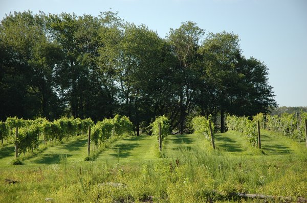 photo 22 of Priam Vineyards