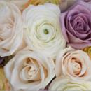 130x130_sq_1397022926428-107-san-diego-wedding-photographer-dennis-mock-pho