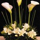 130x130 sq 1302202322837 white20flowers