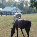 130x130 sq 1319220475589 horses