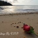 130x130 sq 1369889365480 rose on beach   brochure photo