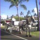 130x130 sq 1361898750739 hawaii2