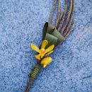130x130_sq_1340812337030-orchid1