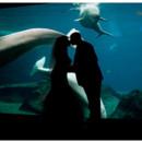 130x130_sq_1395712593506-atlanta-wedding-photographer-georiga-aquarium-wedd