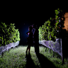 220x220 sq 1369254992187 night in the vines