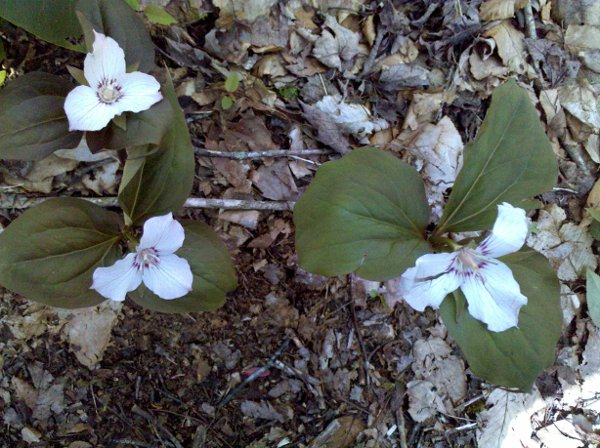 photo 39 of Trillium Ceremonies