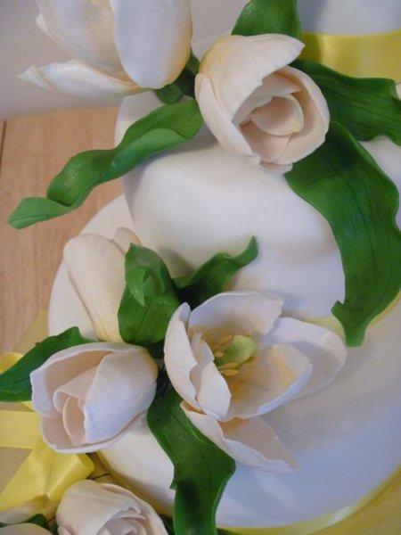 600x600 1335563153602 tulip2