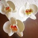130x130 sq 1432003927739 sugar phalaenopsis orchids 2