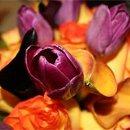 130x130 sq 1315608047753 tulip
