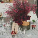 Centerpiece with red amaryllis and berries.