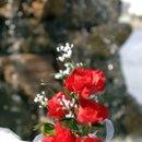 130x130_sq_1205030313065-flowerrock