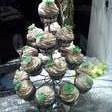 130x130_sq_1370489586203-wedding-cupcakes