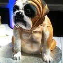 130x130 sq 1376630325135 bull dog cake