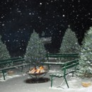 130x130 sq 1443650354635 patio christmas trees
