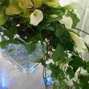 130x130 sq 1231117286015 cymbidiumorchids,callas,beargrassandivy