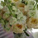 130x130 sq 1231117319390 gardenrosesstock,stephanotis,hyacinths