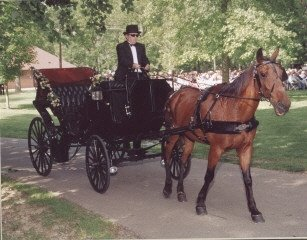 photo 3 of Serenity Farms Carriages