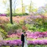 The New York Botanical Garden image
