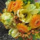 130x130 sq 1418417205513 orange dahlia parrot