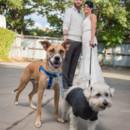 130x130 sq 1475170545976 urban wedding dogs