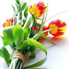 220x220 sq 1340671742596 flowers