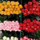 130x130 sq 1369592703413 bulk roses