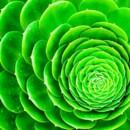 130x130 sq 1369779195354 green green succulent
