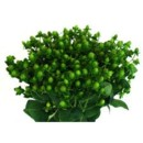 130x130 sq 1369779228485 hypericum green