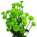 130x130 sq 1369779247955 pompon button green