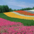130x130 sq 1369939462008 colorful field