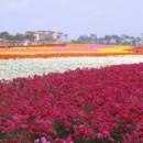 130x130 sq 1369939556847 flower field 2