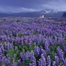 130x130 sq 1369939578341 flower field11