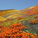 130x130 sq 1369940124277 spring flower field