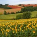 130x130 sq 1369940416481 sun flower field wallpapers