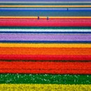 130x130 sq 1369943942467 flowerfield52
