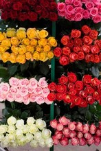 220x220 1369592703413 bulk roses