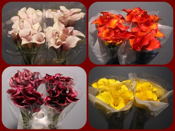 photo 28 of Sunglow Bulk Flowers